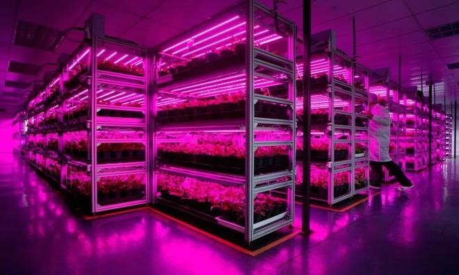 Trồng rau bằng đèn LED sản lượng 80 tấn mỗi năm 4