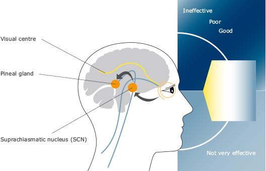 Ánh sáng và thần kinh
