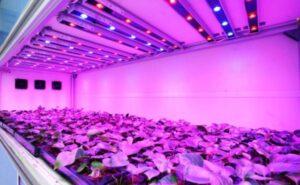 Đèn LED cây trồng