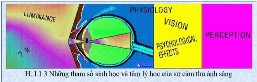 Những tham số sinh học và tâm lý học của cảm thụ ánh sáng